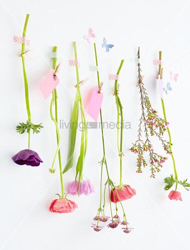 Verschiedene Frühlingsblumen mit Masking Tape an einer Leine