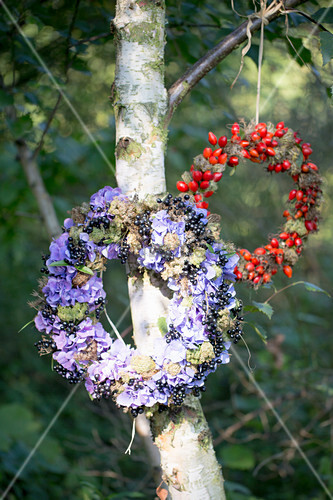 Wreath of hydrangeas and blackcurrants hung on tree and wreath of rose hips hung on tree