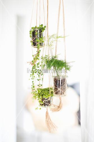 Macrame plant holders