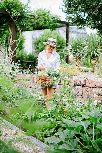 Frau mit Sommerhut erntet Gemüse im Garten