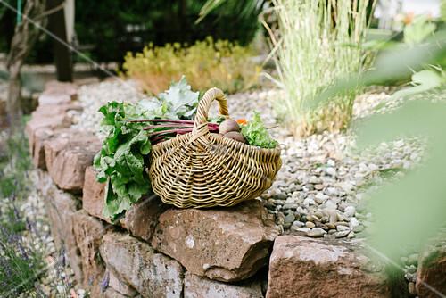 Basket of freshly picked vegetables next to garden pond