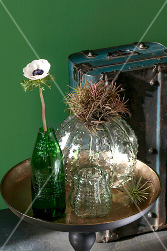 Anemone in cut-off wine bottle next to air plants and vases