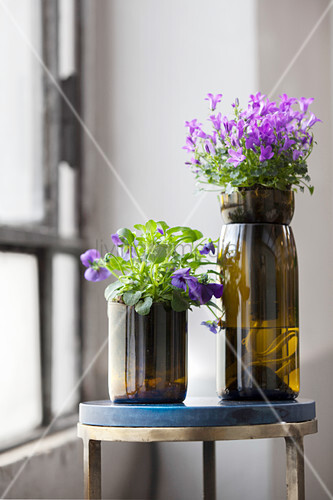 Violas and campanula in vases made from cut-off wine bottles