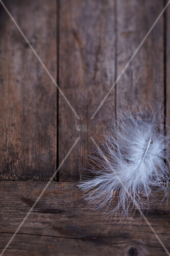 Feather on rustic wooden background