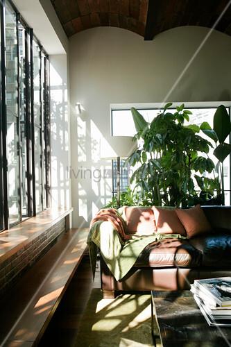 Sonnenlicht scheint durch Fensterfront auf ein braunes Sofa