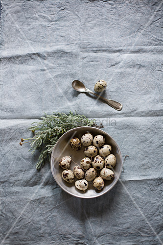 Quail eggs in dish and flowering sprig on rough cloth