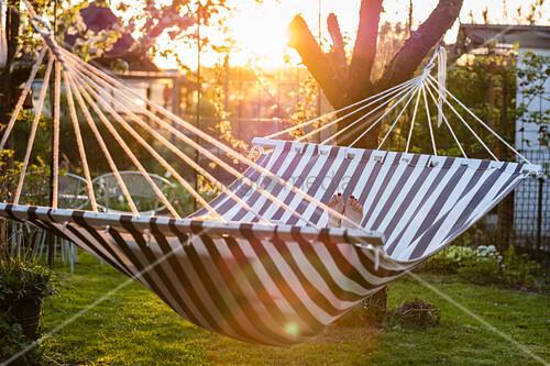 Hammock in evening sunshine