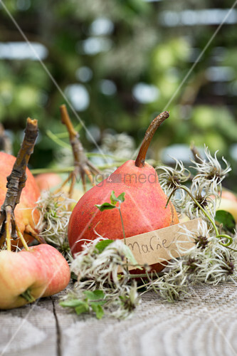 Red Williams pears, crab apples and name tag