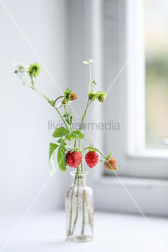 Wild strawberries in glass vase on windowsill