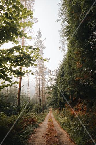 Landstraße durch den nebligen Herbstwald
