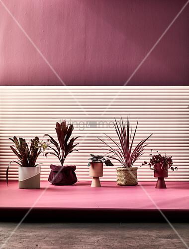 Zimmerpflanzen auf Podest vor dunkelrote Wand mit teilweise heller Verkleidung