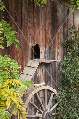 Katzenleiter am Holzhaus