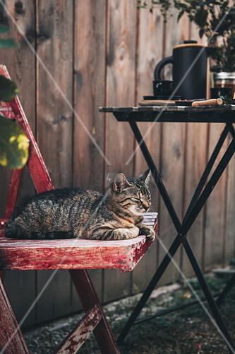 Katze auf Holzstuhl neben gedecktem Tisch im Garten