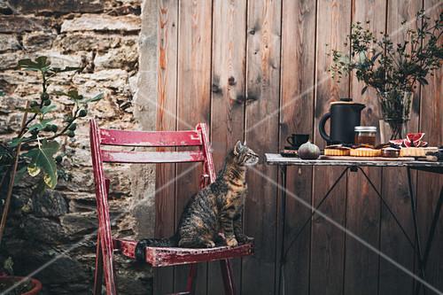 Katze auf Holzstuhl neben gedecktem Tisch mit Feigentarte und Kaffee im Garten