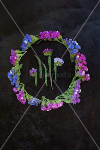 Blüten vom Strandflieder (Limonium) als Legebild auf dunklem Untergrund