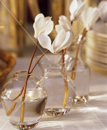 weiße Alpenveilchenblüten in Glasvasen als Tischdeko