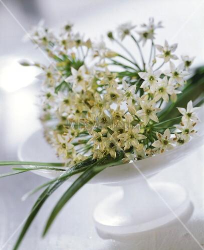 weiße Blüten in einer Schale