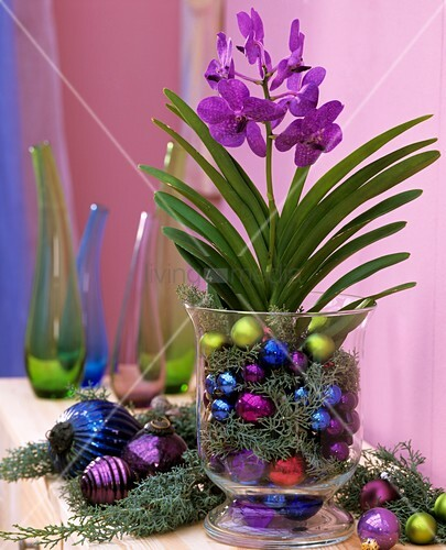 Blue orchid in a glass with Arizona cypress and baubles