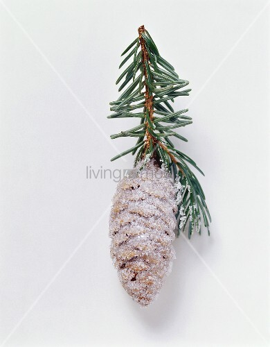 Christmas decoration: sugar-coated cone