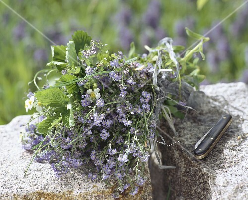 Bunch of forget-me-nots & wild strawberry on stones