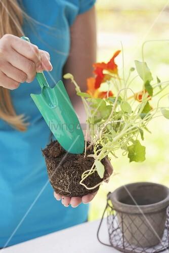 Frau hält Kapuzinerkressepflanze mit Gartenschaufel