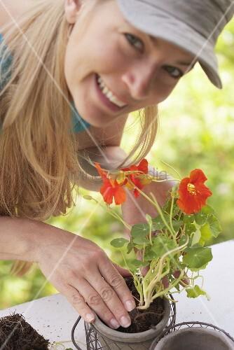 Frau setzt Kapuzinerkressepflanze in Blumentopf