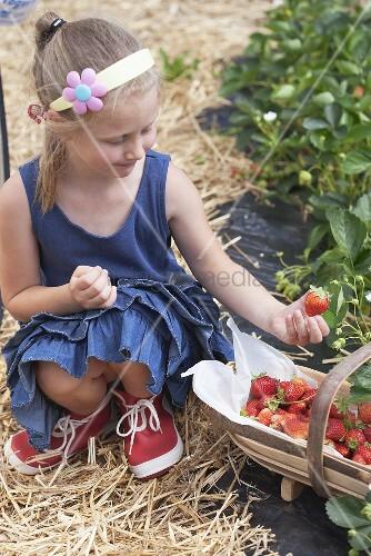 Blondes Mädchen pflückt Erdbeeren