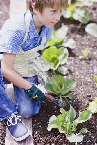 Kleiner Junge lockert die Erde im Gemüsebeet