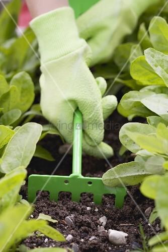 Kinderhand lockert die Erde im Gemüsebeet