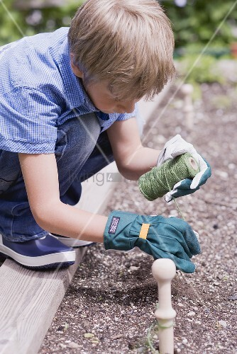 A little boy tying string along a vegetable patch