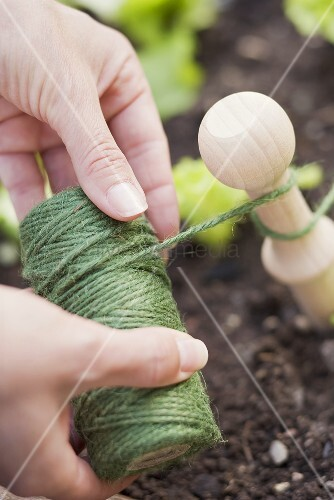 A woman tying twine in a lettuce patch