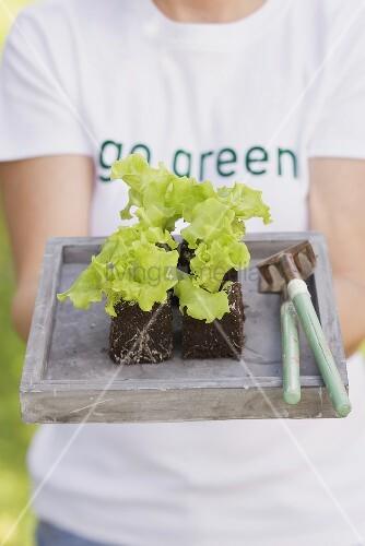 Frau hält Tablett mit Salatpflanzen und Gartenwerkzeug
