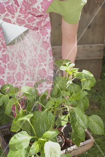 Junge Frau giesst Gartenpflanze