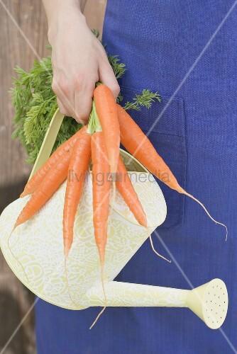 Junge Frau hält Karotten und Giesskanne