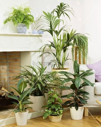 verschiedene gr npflanzen f rs zimmer bild kaufen. Black Bedroom Furniture Sets. Home Design Ideas