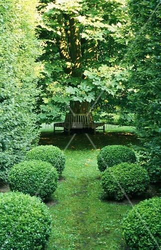 buchsbaumreihe mit blick auf bild kaufen 00708092 living4media. Black Bedroom Furniture Sets. Home Design Ideas
