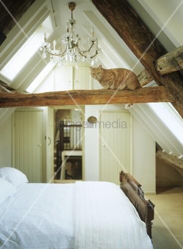Schlafzimmer Dachgeschoss schlafzimmer im dachgeschoss mit katze auf holzbalken bild kaufen