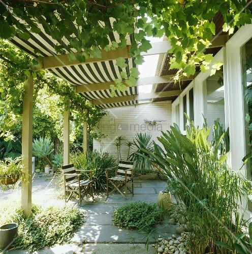 bewachsene pergola ber der terrasse eines mediterraner hauses bild kaufen living4media. Black Bedroom Furniture Sets. Home Design Ideas